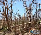 """""""威马逊""""重创600亩生态林"""