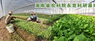 海南省农科院永发科研基地 · 澄迈