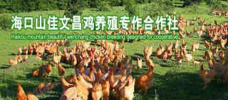 山佳文昌鸡养殖专业合作社·海口