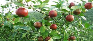 恒萃油茶(森源)农民专业合作社·琼海