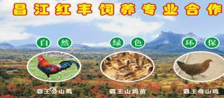 红丰霸王岭山鸡养殖·昌江