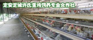 许氏蛋鸡饲养专业合作社·定安