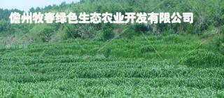 牧春绿色生态农业·儋州