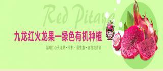 九龙红 红心火龙果·东方