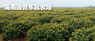 东昌农场荔枝·海口