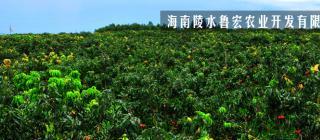 海南陵水鲁宏农业开发有限公司·陵水