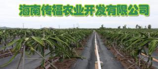 海南传福农业开发有限公司·乐东