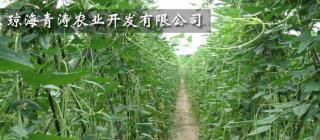 琼海青涛农业开发有限公司·琼海