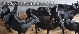 文昌保华林下黑山羊养殖有限公司·文昌