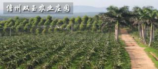 儋州双玉农业庄园·儋州