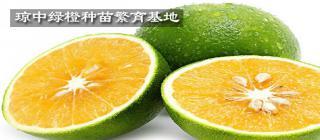 琼中绿橙种苗繁育基地·琼中