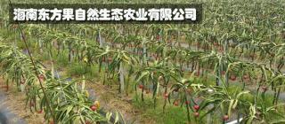 海南东方果自然生态农业有限公司·东方