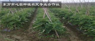 东方市心实种植农民专业合作社·东方