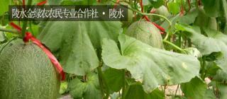 陵水金绿农农民专业合作社·陵水