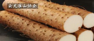 云龙淮山协会·海口