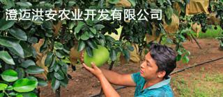 澄迈洪安农业开发有限公司 ·澄迈
