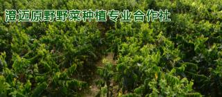 原野野菜种植专业合作社·澄迈