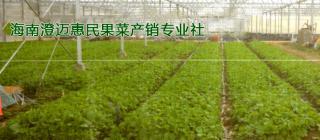 惠民果菜产销专业合作社 · 澄迈