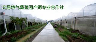地气蔬菜园·文昌