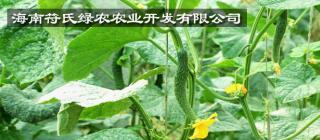 海南符氏绿农农业开发有限公司·陵水