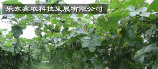 乐东鑫农科技发展有限公司·乐东