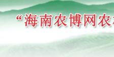 """""""海南农博网农村信息服务平台开发与应用""""项目今日成效"""